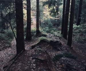 forest, trees, and wanderlust image
