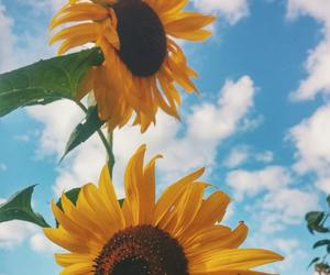 sunflower, aesthetic, and beauty image