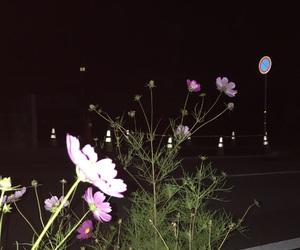 film, flower, and mi image