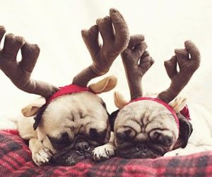pug, christmas, and cute image