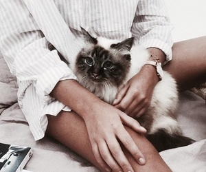 aesthetic, animals, and cat image