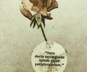 türkçe sözler