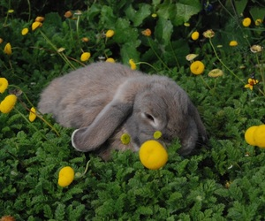 animal, bunny, and flowers image