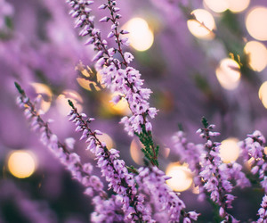 background, flower, and lilac image