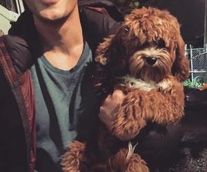 bob morley, bellamy blake, and dog image