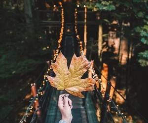 autumn and fall image