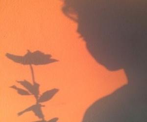 orange, aesthetic, and flowers image