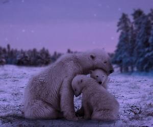 Polar Bear, animal, and winter image
