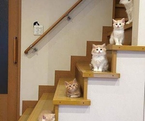 animals, decor, and kittens image