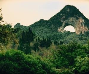 landscape and rainforest image