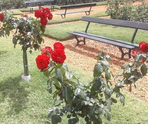 buenosaires, rosas, and rosedal image