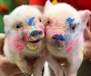 Animais, animal, and pig image