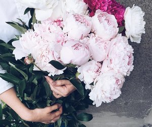 picture, flowers, and peonies image