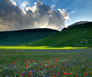 clouds, sun, and flowers image