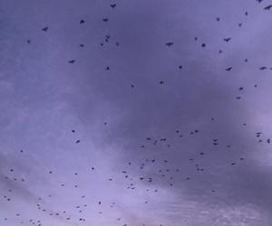 bird, небо, and закат image