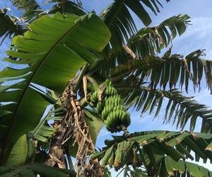 tropical, blue, and green image