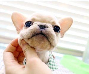 beautiful, dog, and pet image