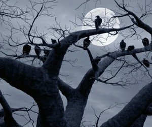 black, crows, and gothic image
