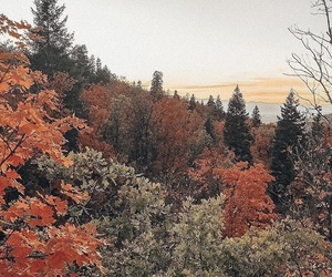 aesthetic, autumn, and explore image