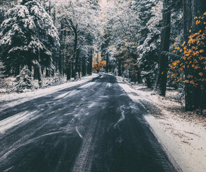 forest, road, and snow image