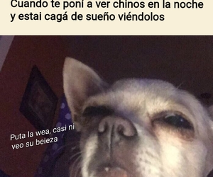 dog, kpop, and meme image