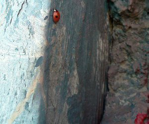 lady bug and paint image