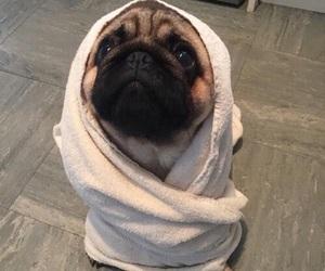 bath, cut, and dog image
