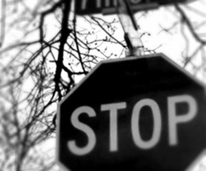 black and white, stop, and trees image