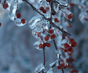 winter, berries, and cold image