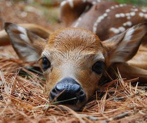 cute, animal, and deer image