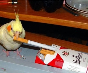 bird, meme, and smoking image