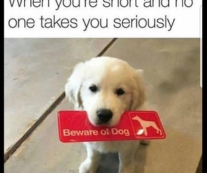 funny, puppy, and short image