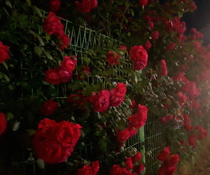 flower, red, and 밤 image