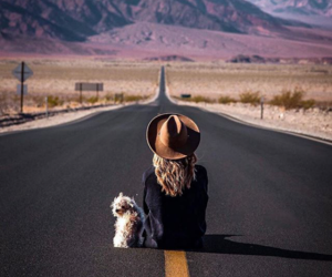 alternative, puppy, and road image