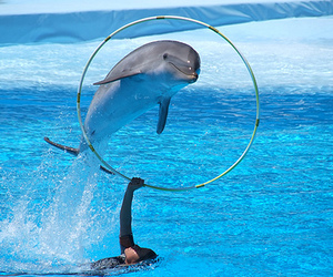 dolphin, photography, and water image
