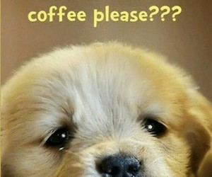 coffee, energy, and word image