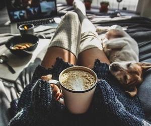 dog, coffee, and cozy image