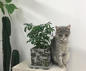 green, aesthetic, and cat image