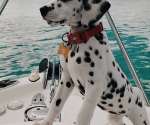 beautiful and dog image