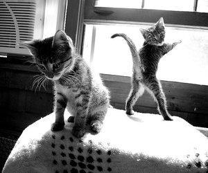 b&w, cats, and cuteness image