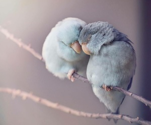 bird, love, and animal image