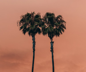 orange, palms, and palm trees image