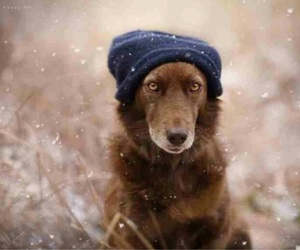 dog, snow, and christmas image