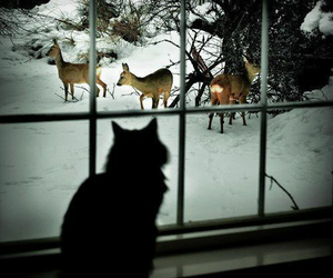 cat, winter, and animal image