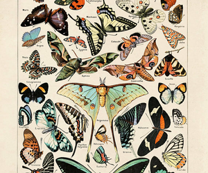 butterfly, colors, and butterfly effect image