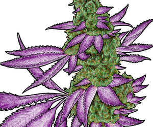 bud, ganja, and plant image