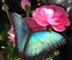 blue, butterfly, and flower image