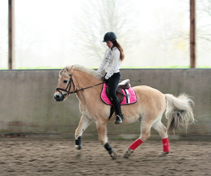 horse, pferd, and pink image