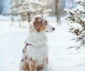 snow, adorable, and animal image