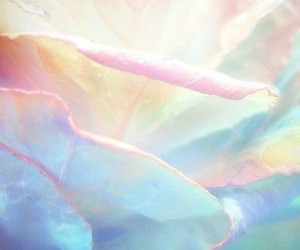 pastel, flowers, and theme image